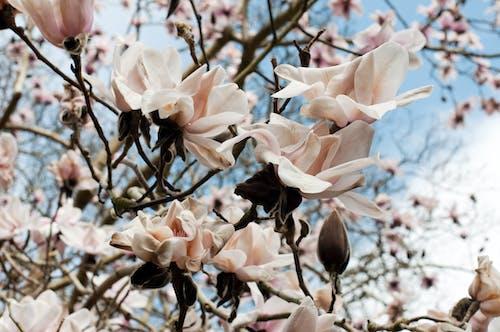 Gratis stockfoto met bloem, bloemen, bomen