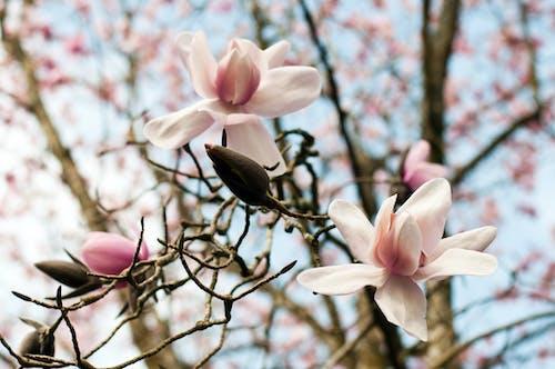 Gratis stockfoto met achtergrond, bloem, bloemen