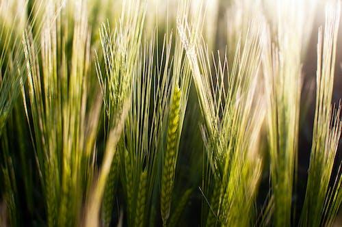 Gratis stockfoto met achtergrond, akkerland, boerenbedrijf
