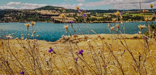 Free stock photo of beauty in nature, flowers, hills, landscape