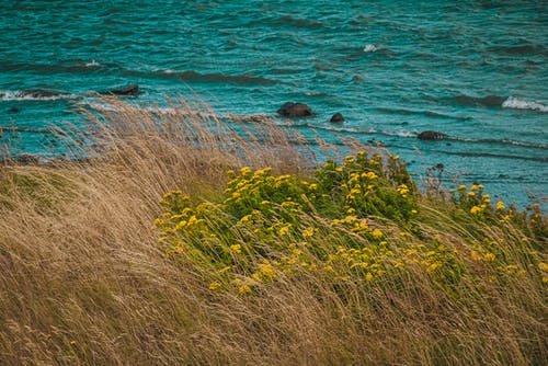 Free stock photo of bay, beauty in nature, flowers, grass