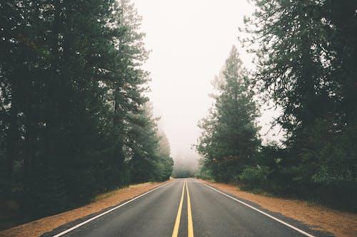 Бесплатное стоковое фото с дорога, лес, прямой, туман