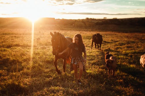 Anonymous woman grazing horse on pasture