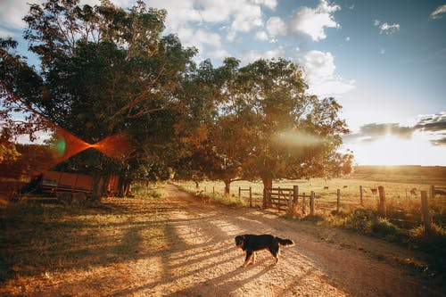 Dog with black fur on country road with pillars and green trees on sides against cloudy sky in summer evening in countryside