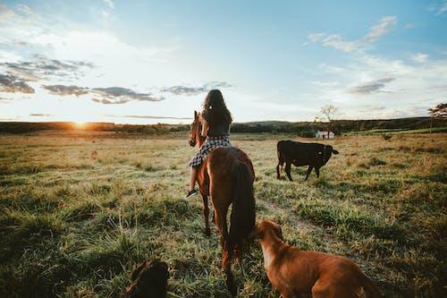 Teenage girl on horseback in field