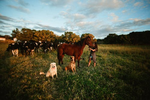 Woman standing by horse among dogs and cows on pasture