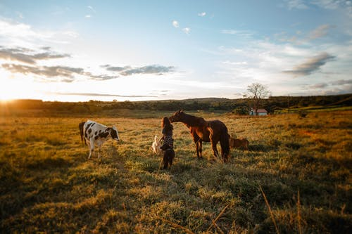 Woman among animals on pasture