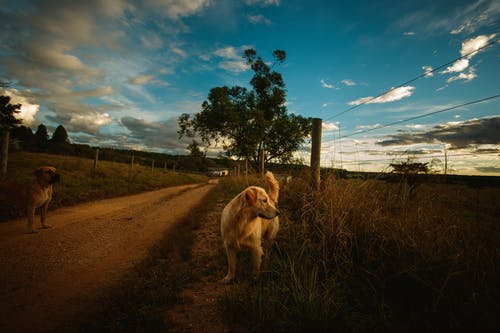 Dogs on road in countryside under vibrant sky