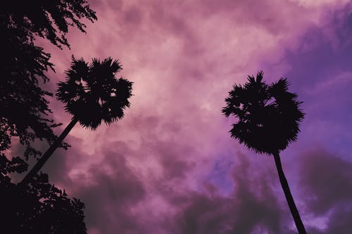 Free stock photo of clouds, coconut trees, dark, evening