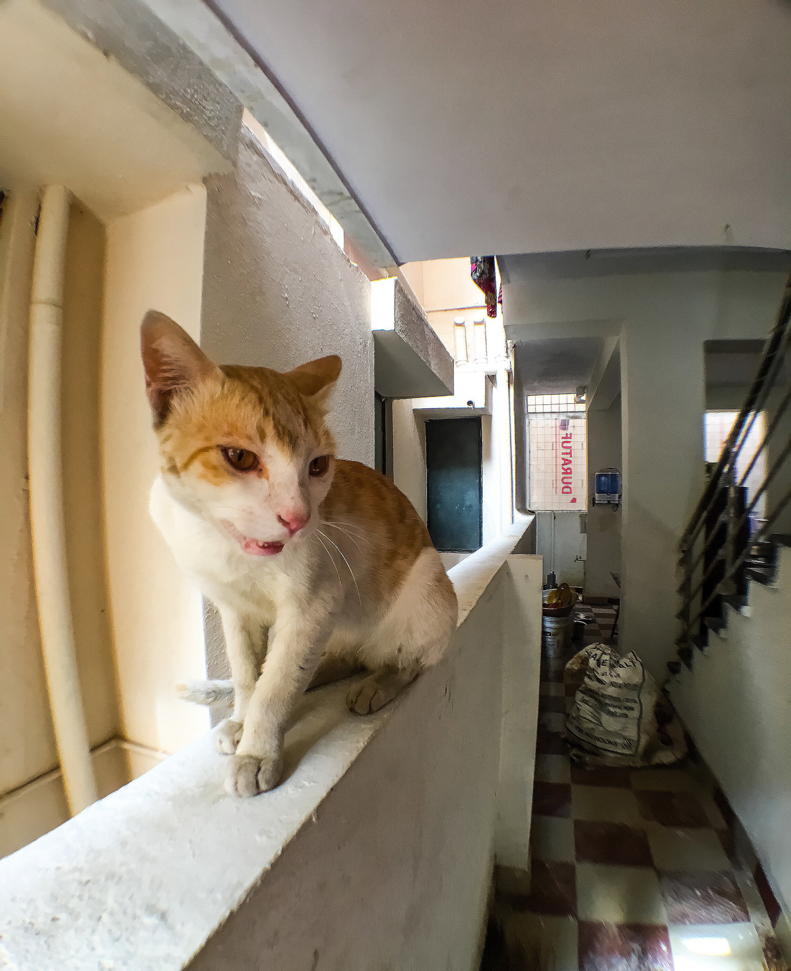 Free stock photo of animal, cat, india, wide angle photography