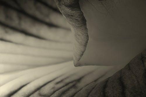 Immagine gratuita di bianco e nero, macro, tornado in fiore