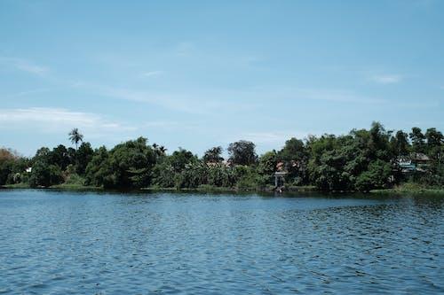 Fotos de stock gratuitas de agua, árbol, árbol en el río, lado del río