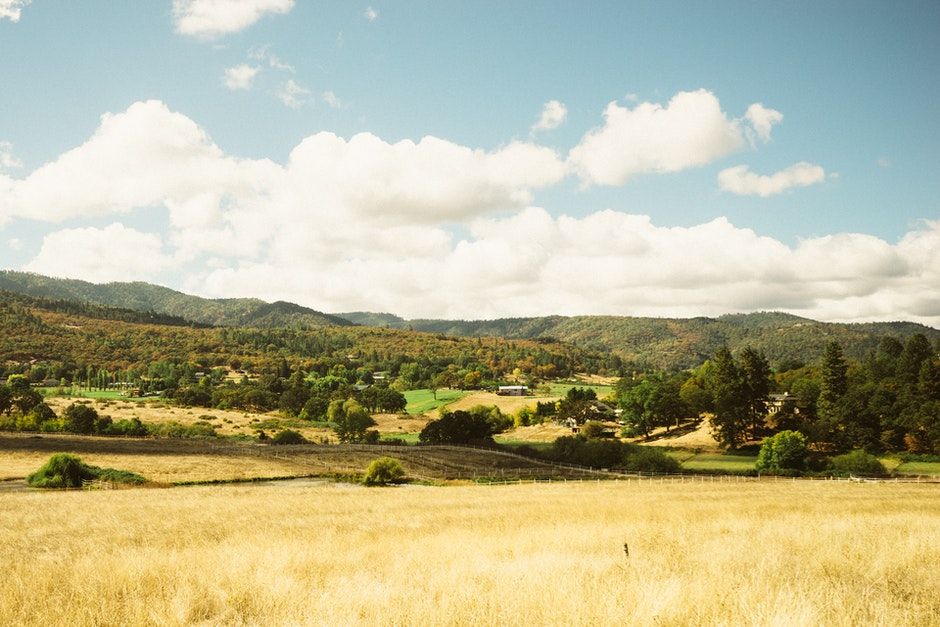 field, landscape