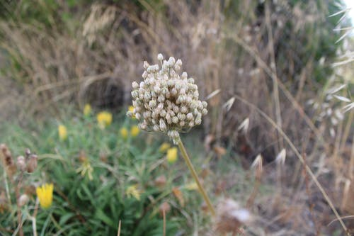 Fotos de stock gratuitas de fotografia, naturaleza, plantas, vegetacion