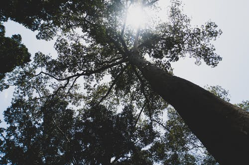Základová fotografie zdarma na téma alberi, sfondo, Srí Lanka