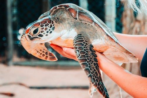 거북이, 껍데기, 동물, 동물원의 무료 스톡 사진