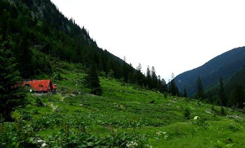 Ảnh lưu trữ miễn phí về cảnh đẹp, đỉnh núi, făgăraș montains