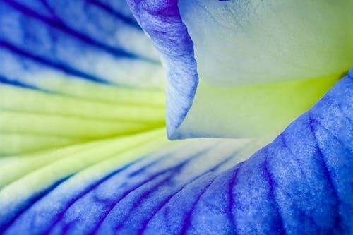 Immagine gratuita di astratto, bellissimo, blu-giallo, colore
