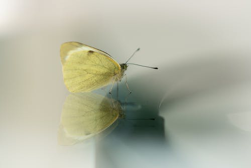 Yellow Butterfly on White Surface