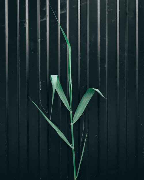 Free stock photo of abstract, black, green