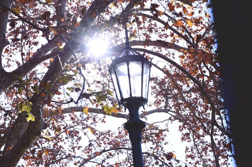 Free stock photo of autumn, fall, lantern, light