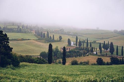 Green fields in foggy weather