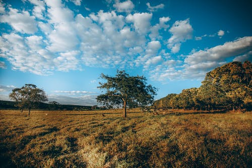 Vibrant blue sky over trees in meadow