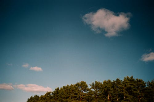 Blue cloudy sky over forest