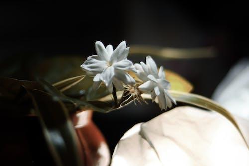 Free stock photo of beautiful flower, beauty of nature, closeup, hd wallpapers