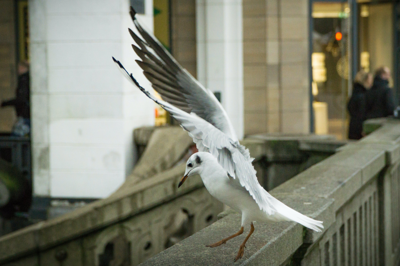 animal, avian, bird