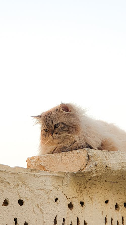 Free stock photo of afternoon, cat, sleepysunday