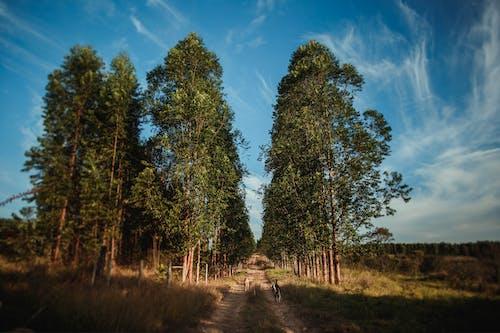 Безкоштовне стокове фото на тему «Деревина, дерево, краєвид, країна»