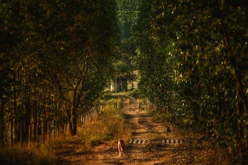 Безкоштовне стокове фото на тему «вказівки, Вулиця, Деревина, дерево»