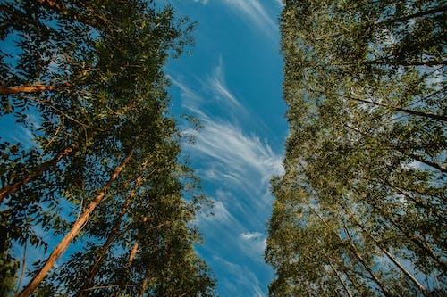 açık, açık hava, ağaç, ağaç kabuğu içeren Ücretsiz stok fotoğraf