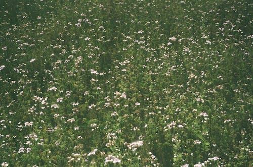 Gratis arkivbilde med blomster, felt av blomster, film, filmkamera