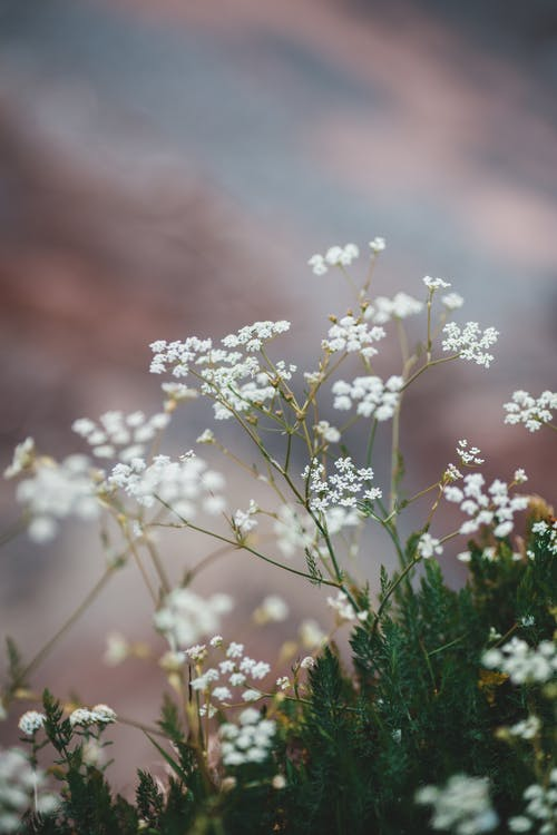 Blooming flowers in green spring field