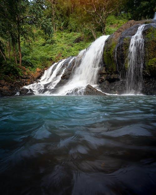 Foto stok gratis air terjun, kehidupan hutan, sungai