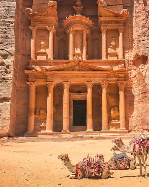 Kostnadsfri bild av av, försvunnen stad, jordan, kamel