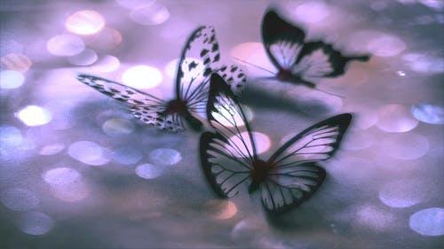 Foto d'estoc gratuïta de abstracte, art, papallona, papallones