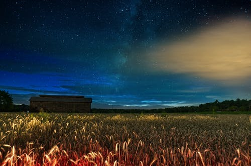 Бесплатное стоковое фото с вечер, закат, зерновые, кукуруза