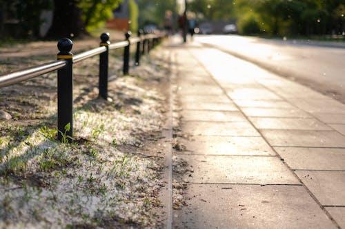 Základová fotografie zdarma na téma alergie, pyl, západ slunce