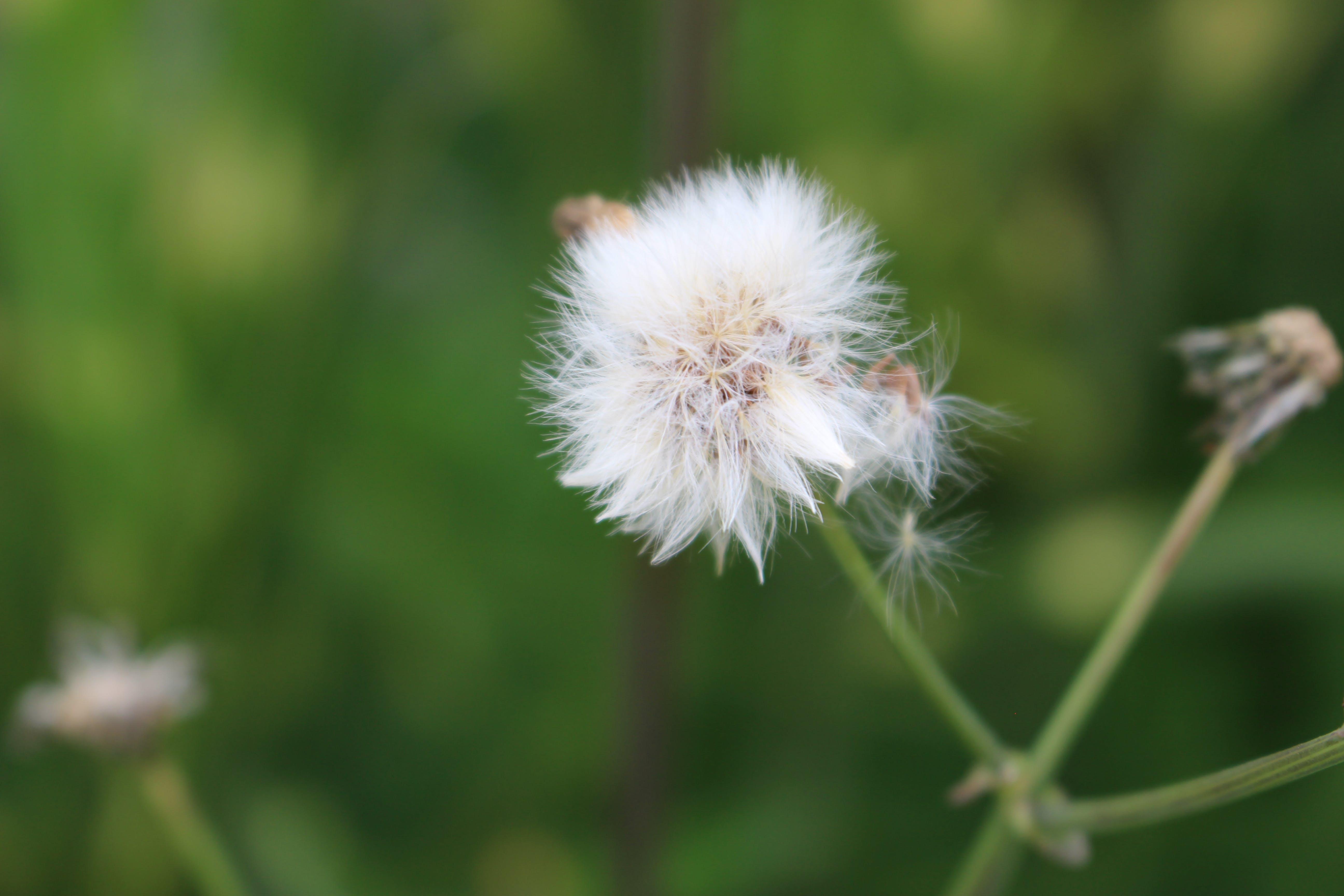 Free stock photo of nature, garden, blur, flower