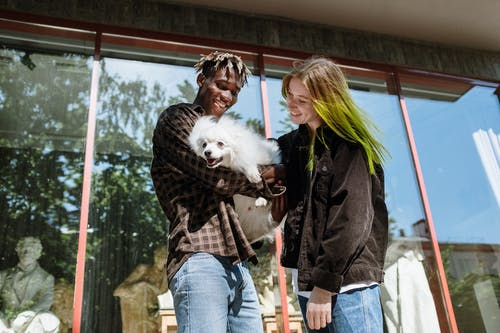 Immagine gratuita di adorabile, afro-americano, cane bianco, capelli colorati