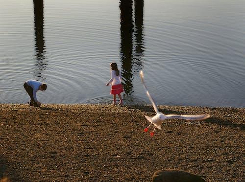 Foto profissional grátis de oceano gaivota costa crianças