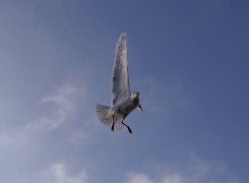 Foto profissional grátis de gaivota voar pássaro céu
