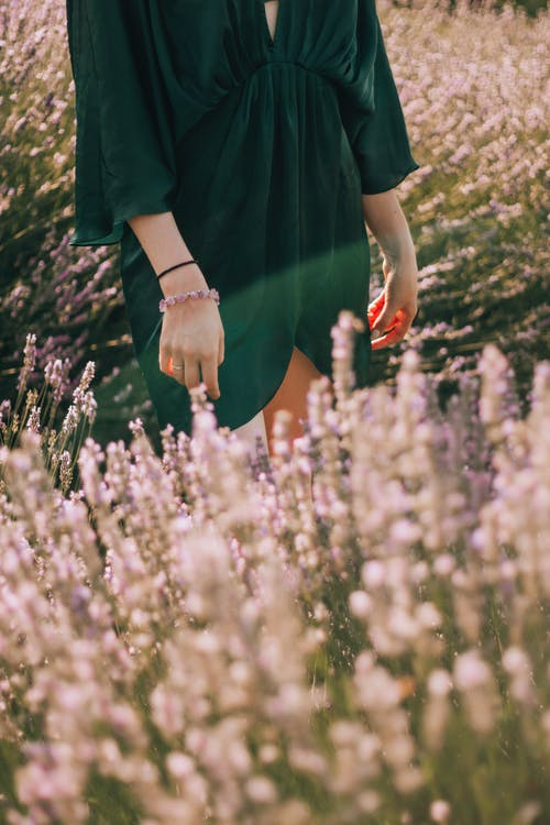 Foto d'estoc gratuïta de a l'aire lliure, arbre, camp, color