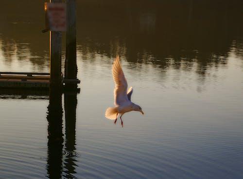 Foto profissional grátis de oceano doca gaivota asas pôr do sol