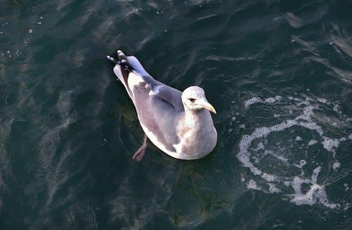 Free stock photo of seagull ocean