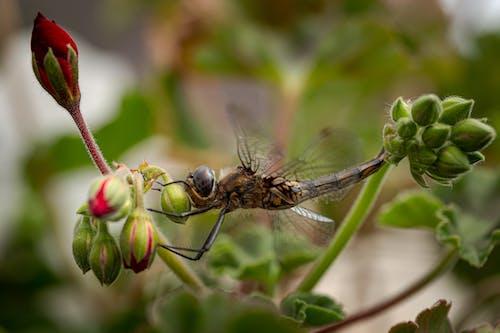 Základová fotografie zdarma na téma hmyz, list, makro, příroda