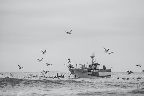 Grayscale Photo of Seabirds and a Boat on the Sea